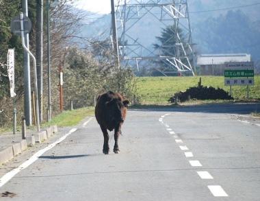 VOA_Herman_-_April_12_2011_Namie-Cow