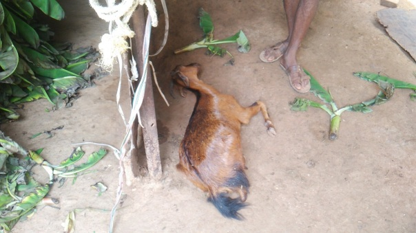 dead-goat-1024