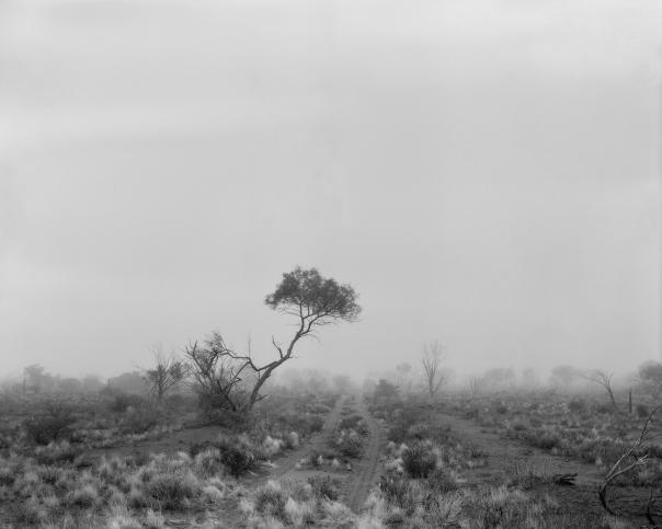 _HERO IMAGE_Paul Ogier_One Tree