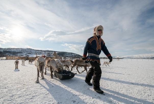 Sami herder