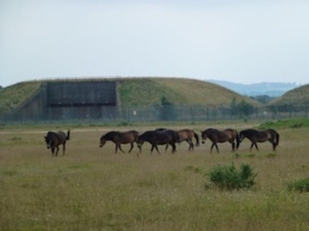 Greenham silos+ponies