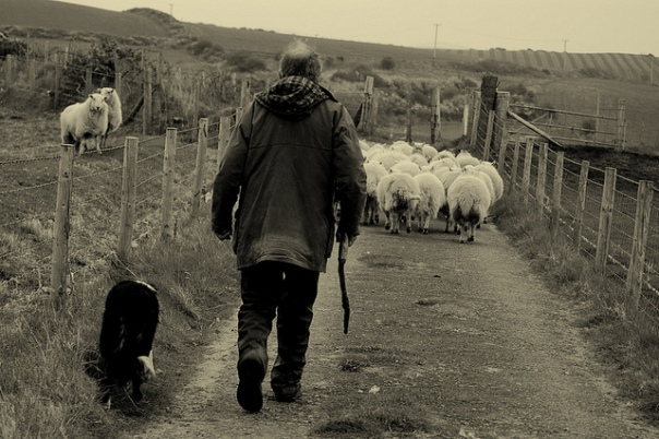Welsh_sheep_farmer