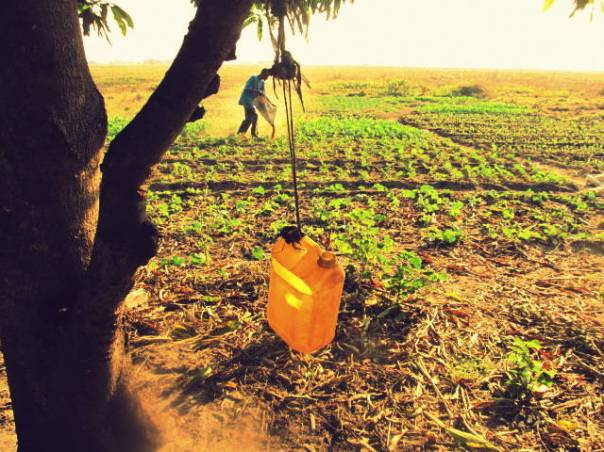 Subsistence_Farming_in_Zambia